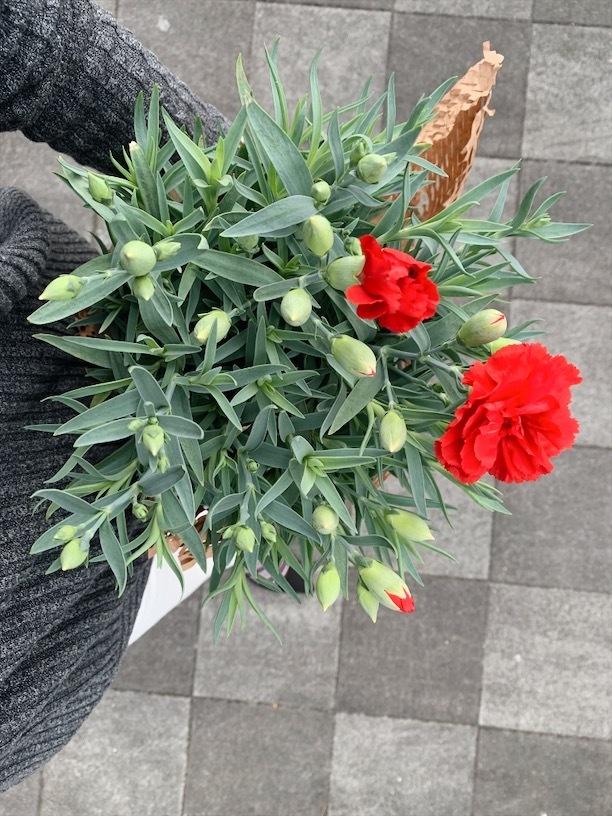 お花&植物のある生活_1_2