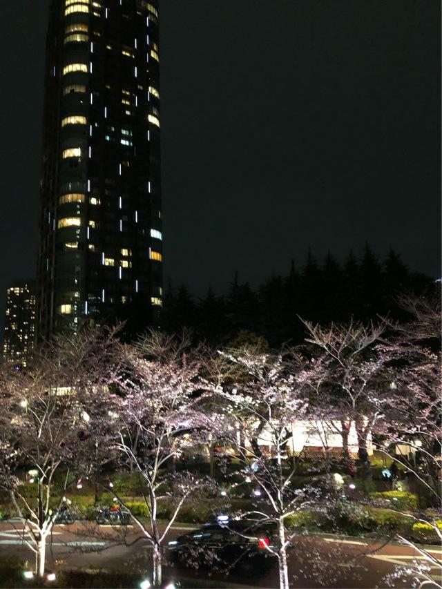 桜を見ながら birthday party♡_1_1