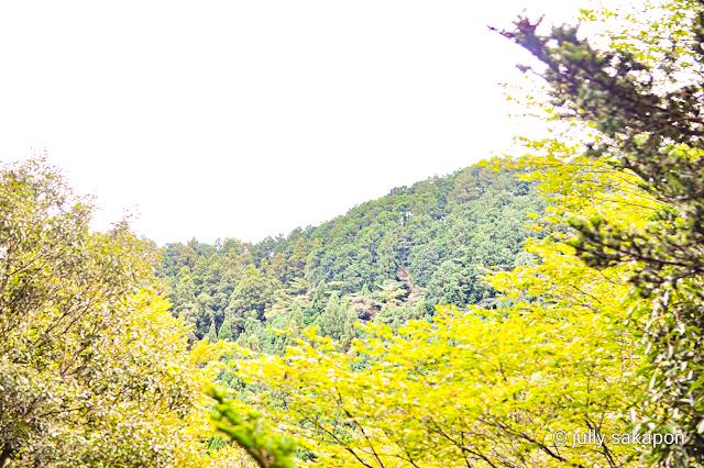 【さかぽんの冒険】苔むす秋の山と温泉プチトリップ❤️@高尾山_1_8