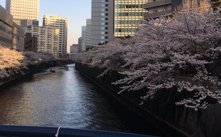春がきた♡桜のコーデ_1_2