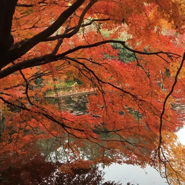 京都で思いがけず紅葉を満喫!_1_3