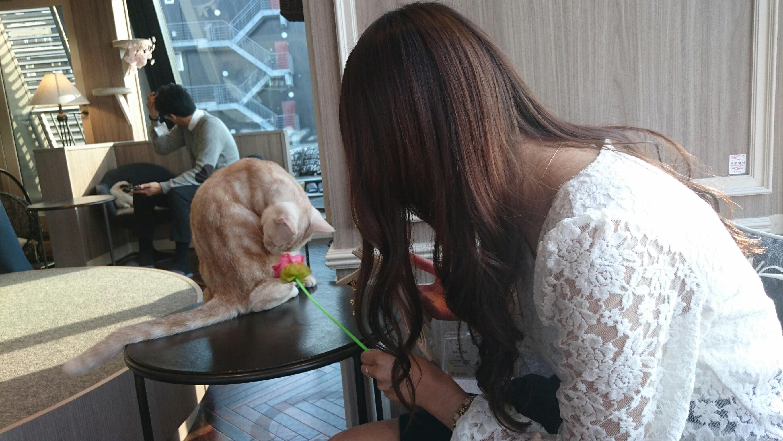 初!猫カフェに行ってきました♡_1_4