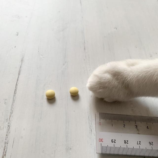アラフォーの美髪ケアには猫の手、じゃなくて「カミエル」。_1_2