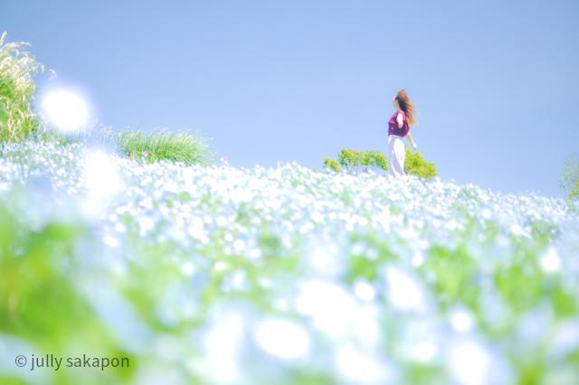 【番外編】ほろほろと藤香り ネモフィラの青に包まれて@昭和記念公園_1_1