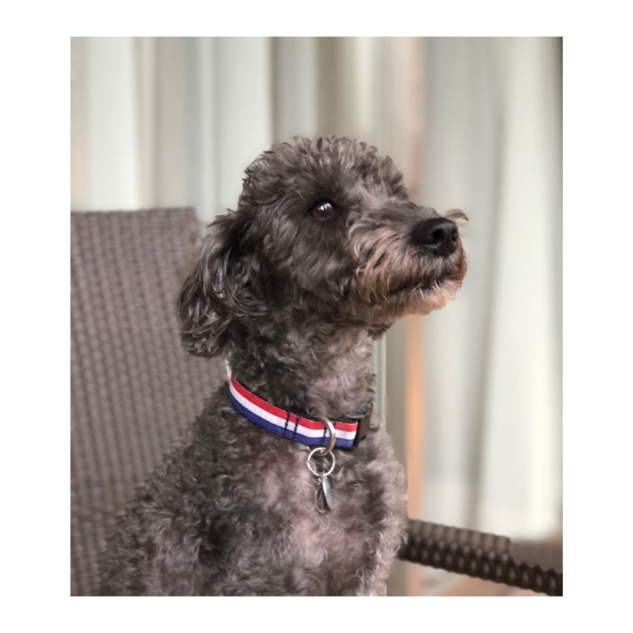 フラワーサロンの看板dog