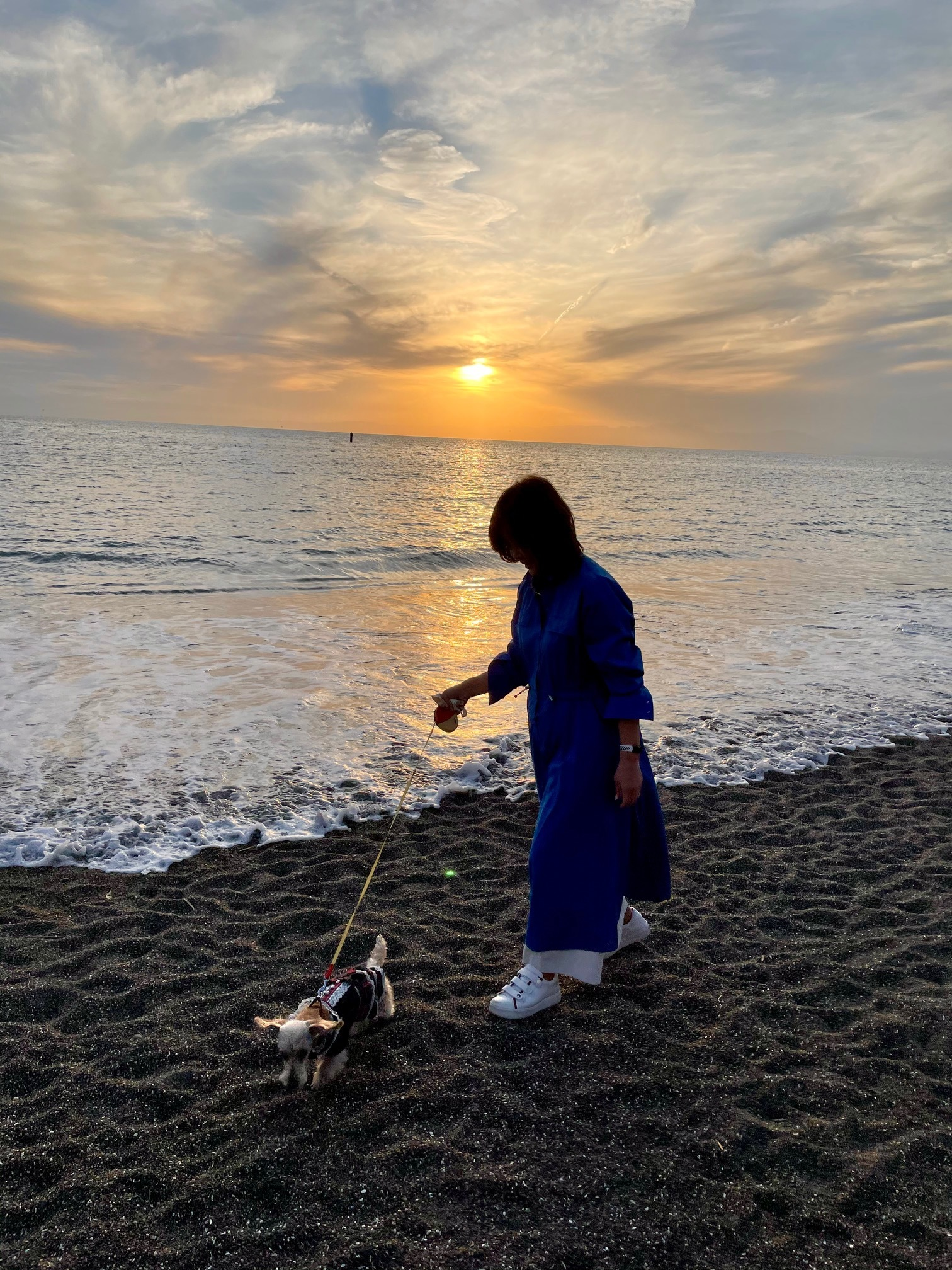 海 湘南 砂浜 ワンコとお散歩