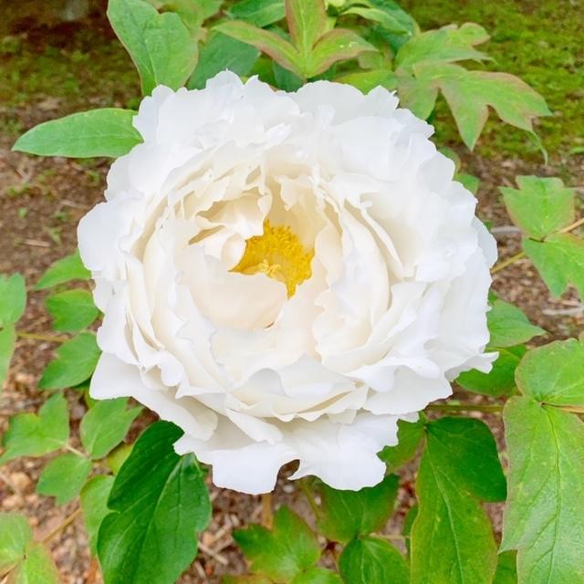 ☆「令和」元年☆藤の花のお花見でスタート!_1_4-2