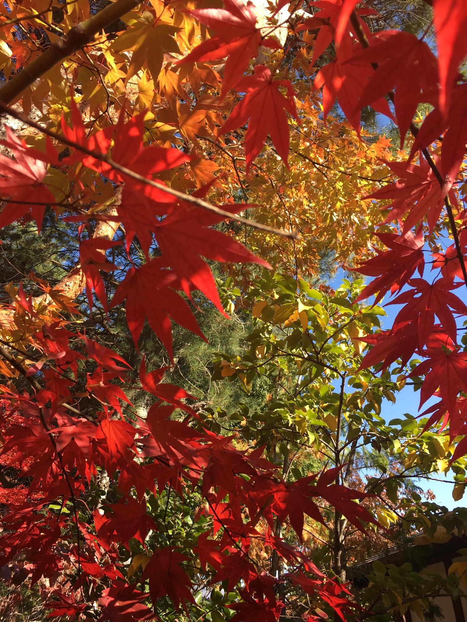 秋の旅 松本_1_4-1