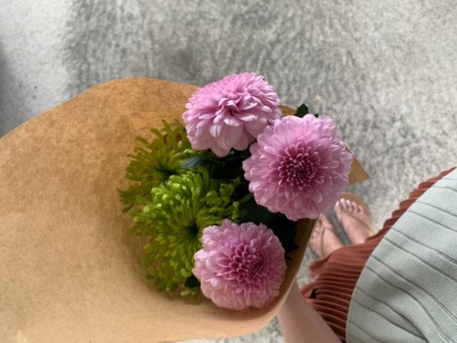 菊[クラッシックマム(緑)、ピンポンマム(ピンク)] 夏でも長持ち。