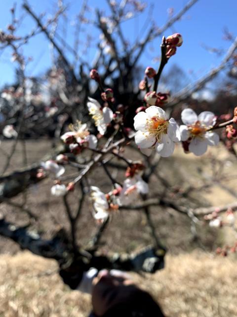 「サステナ*ブルー*へようこそ」春を迎える山は生命がみなぎっている!_1_6-2