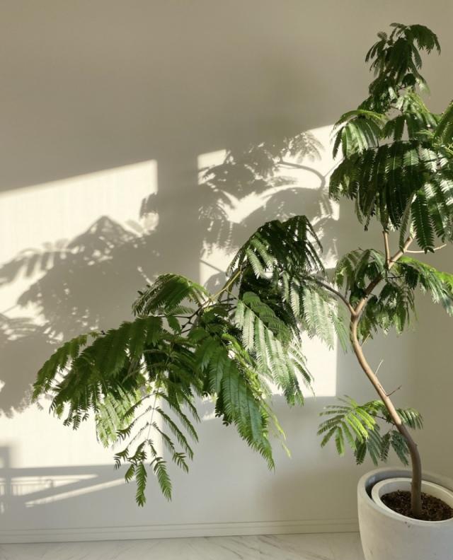 植物と心地良く暮らす。【40代 私の暮らし】_1_4