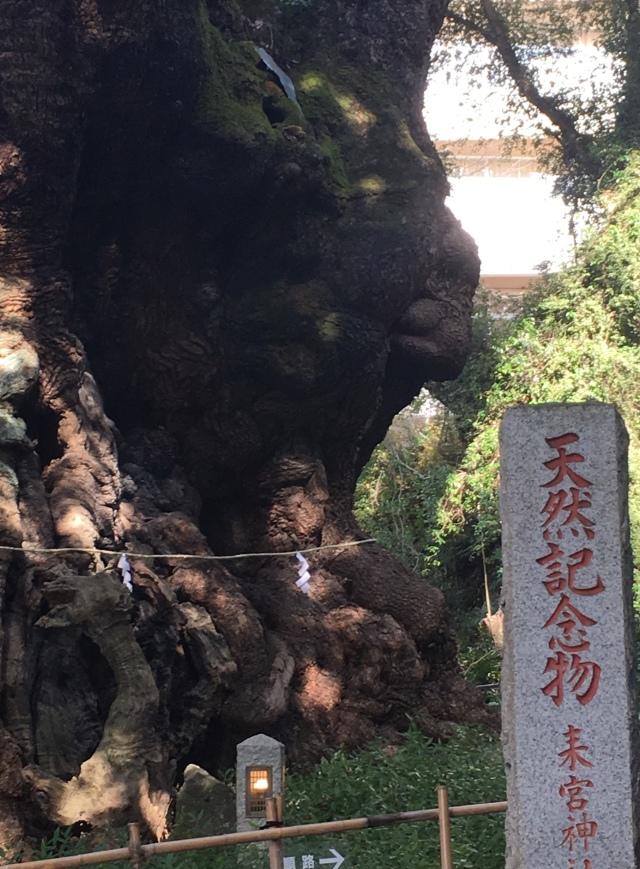 関東No1と言われるパワースポット、来宮神社の大楠へ。_1_2