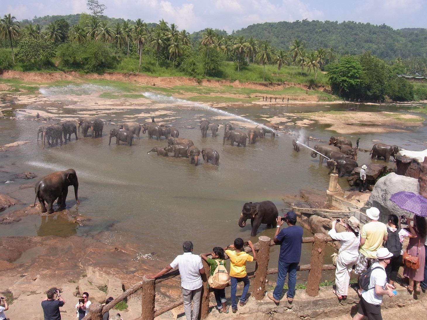 ピンナワラの象の孤児院@スリランカ_1_3