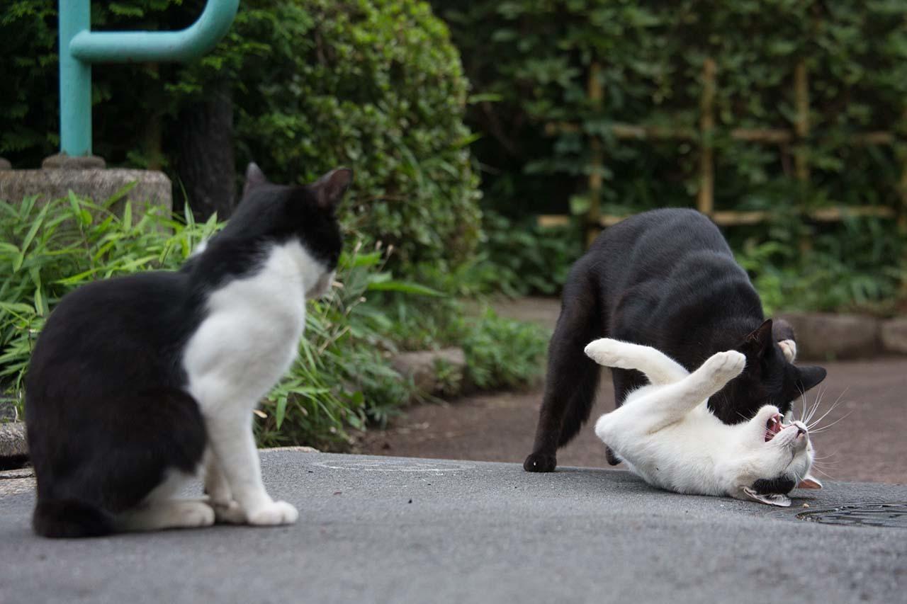 猫写真家 沖昌之の猫写真