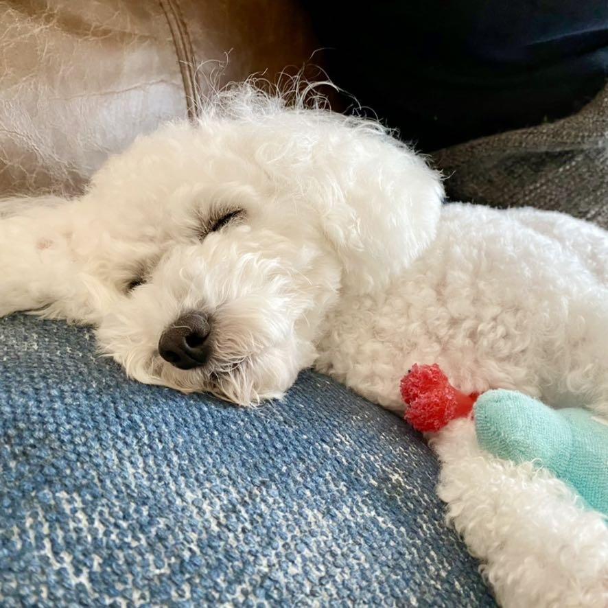 我が家の愛犬ハッピーの寝姿