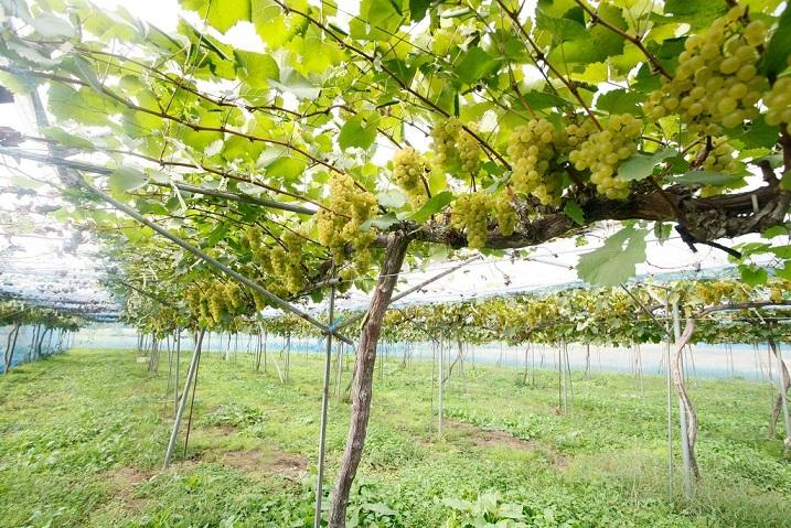"""""""津軽&会津""""のワインは東北らしさが素敵。しみじみ、優しい気持ちで味わいたい!【飲むんだったら、イケてるワイン/WEB特別篇】 _1_6"""