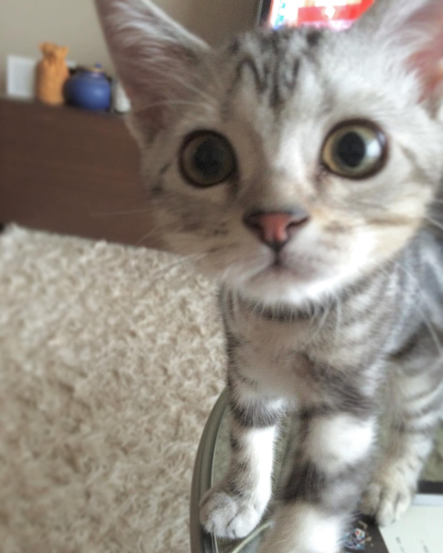 子猫のアラン、近い近い!_1_1
