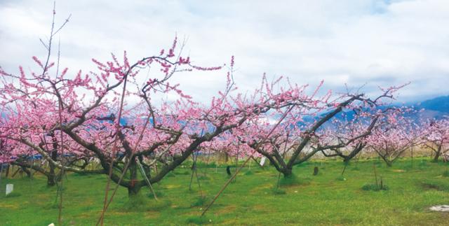周辺は桃の産地