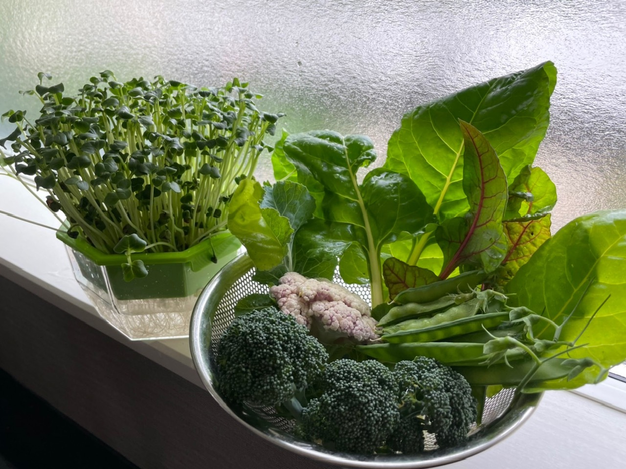 カイワレ大根 収穫した野菜