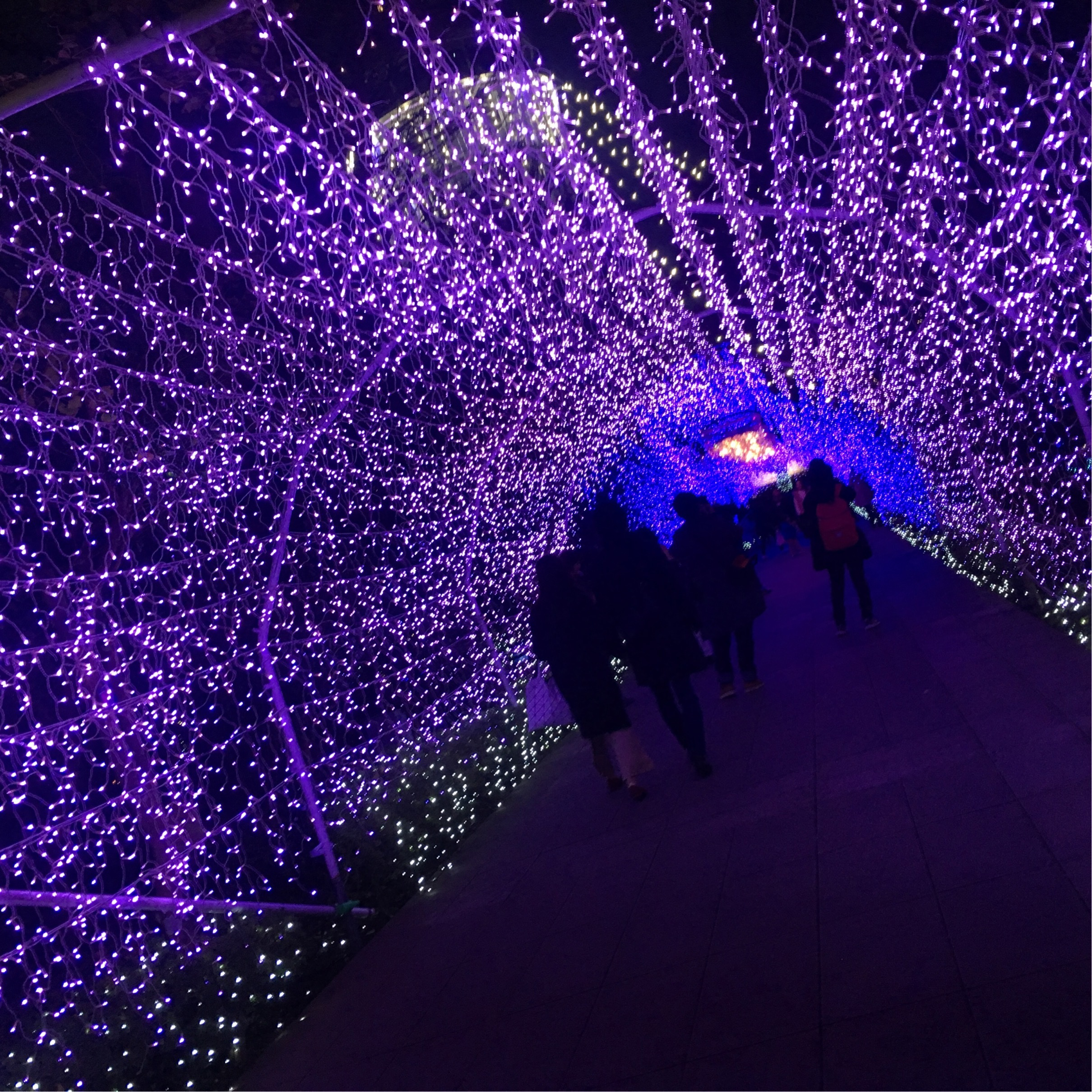 クリスマスデートにぴったり♡江ノ島イルミネーション_1_4-3