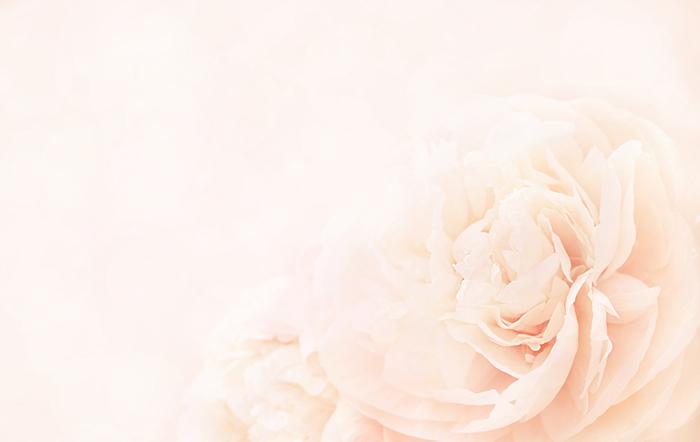版権:Ulada/Shutterstock.com