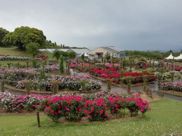 ばら園の風景の一部。これだけでもわくわくします。