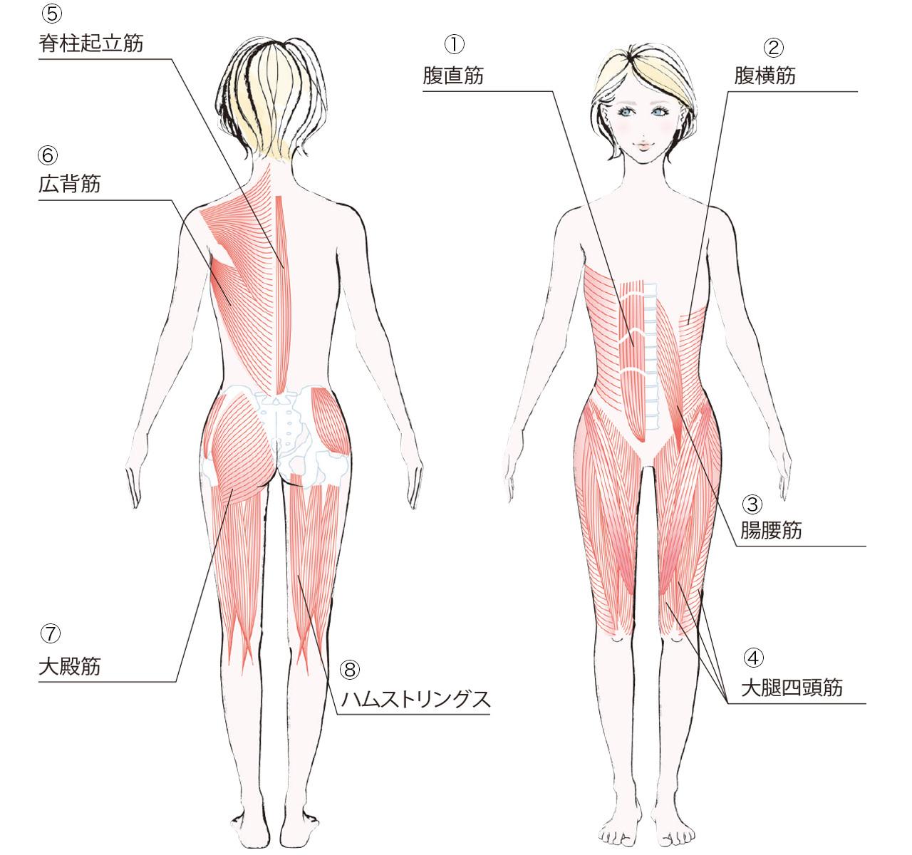 正しい姿勢で体型キープ!意識すべき筋肉は?【キレイになる活】_2_1