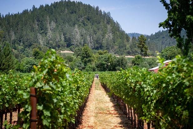日本料理に合う赤を発見! カリフォルニアの新星「パウロニア」の魅力とは?【飲むんだったら、イケてるワイン/WEB特別篇】_1_9