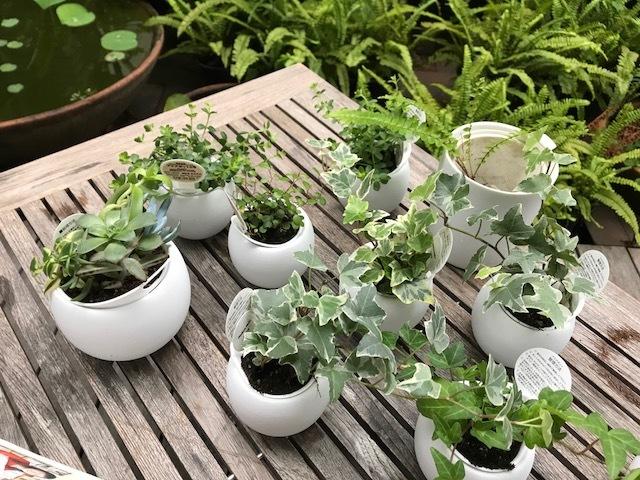 植物で和むおうち時間_1_4-3