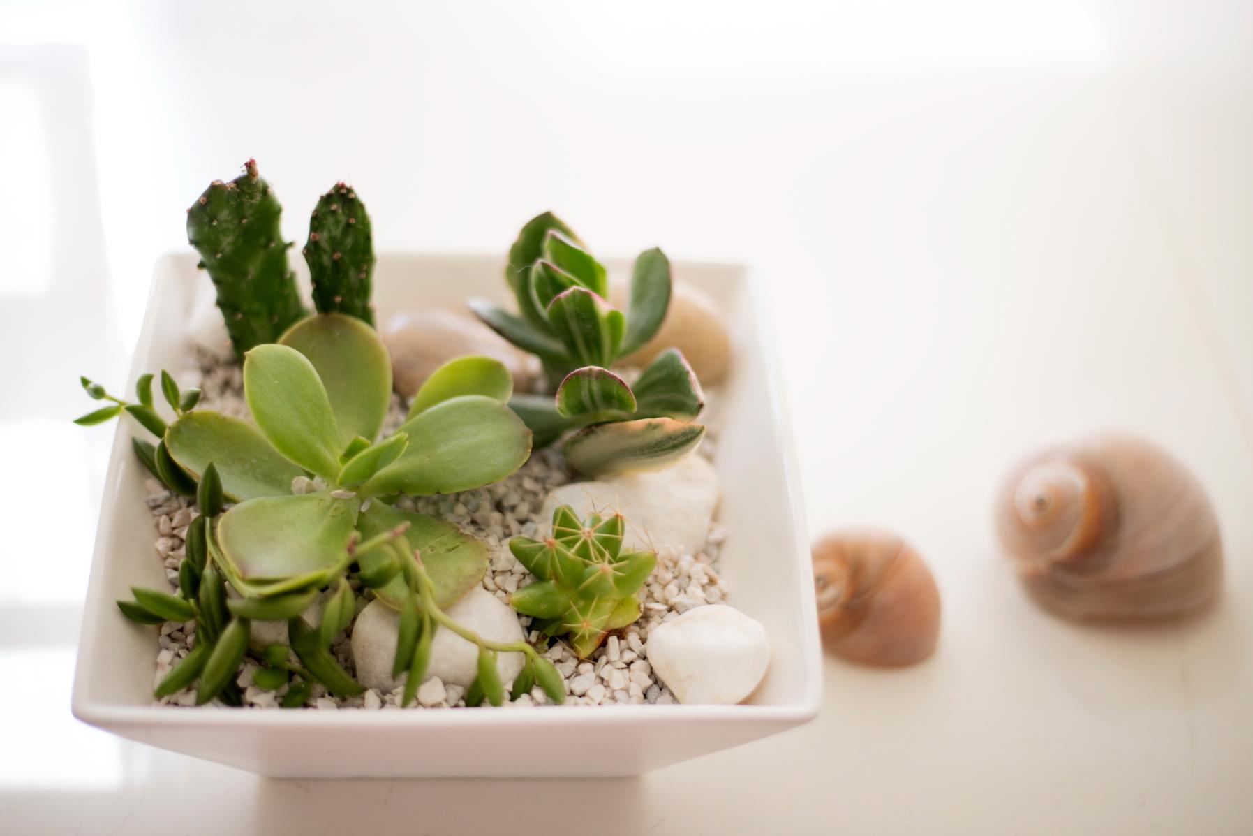 インテリアのグリーン①多肉植物の寄せ植えを、美しく見せる2つのルール_1_1