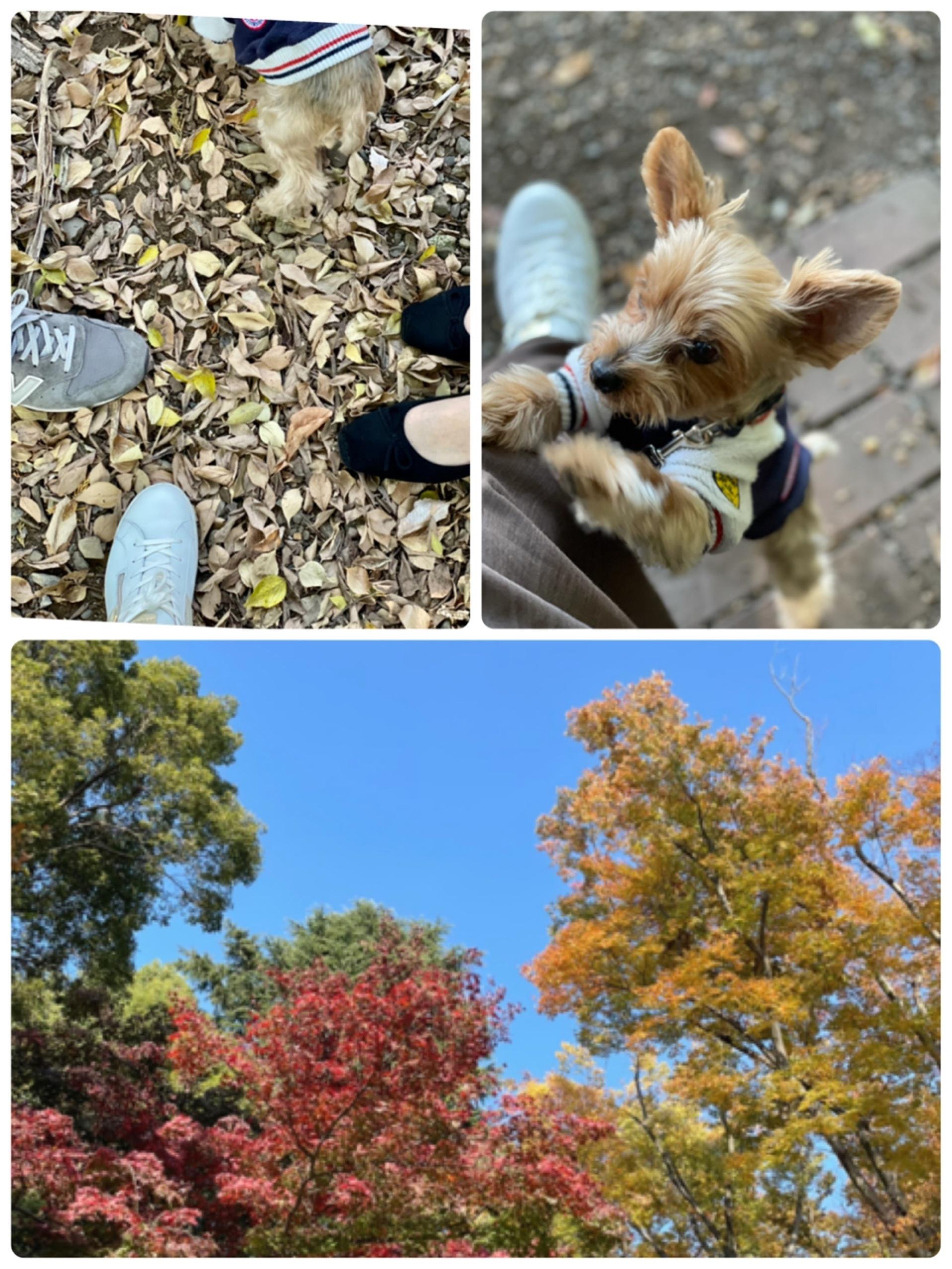 愛犬と秋のお出かけ_1_1