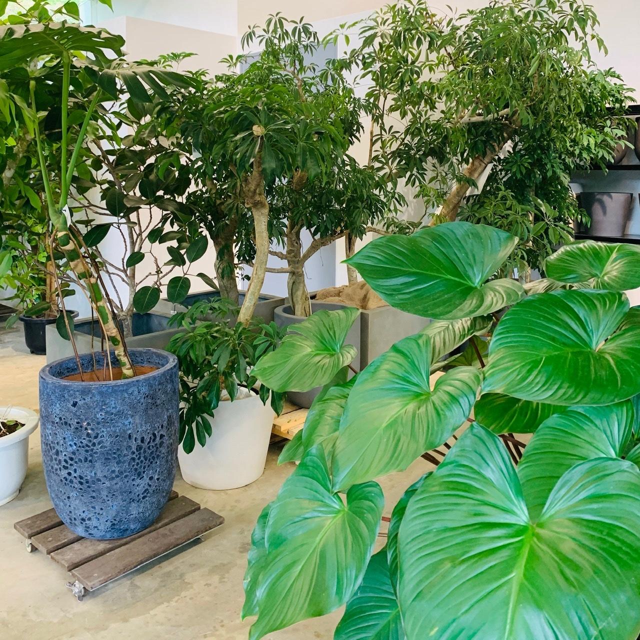 個性溢れる植物
