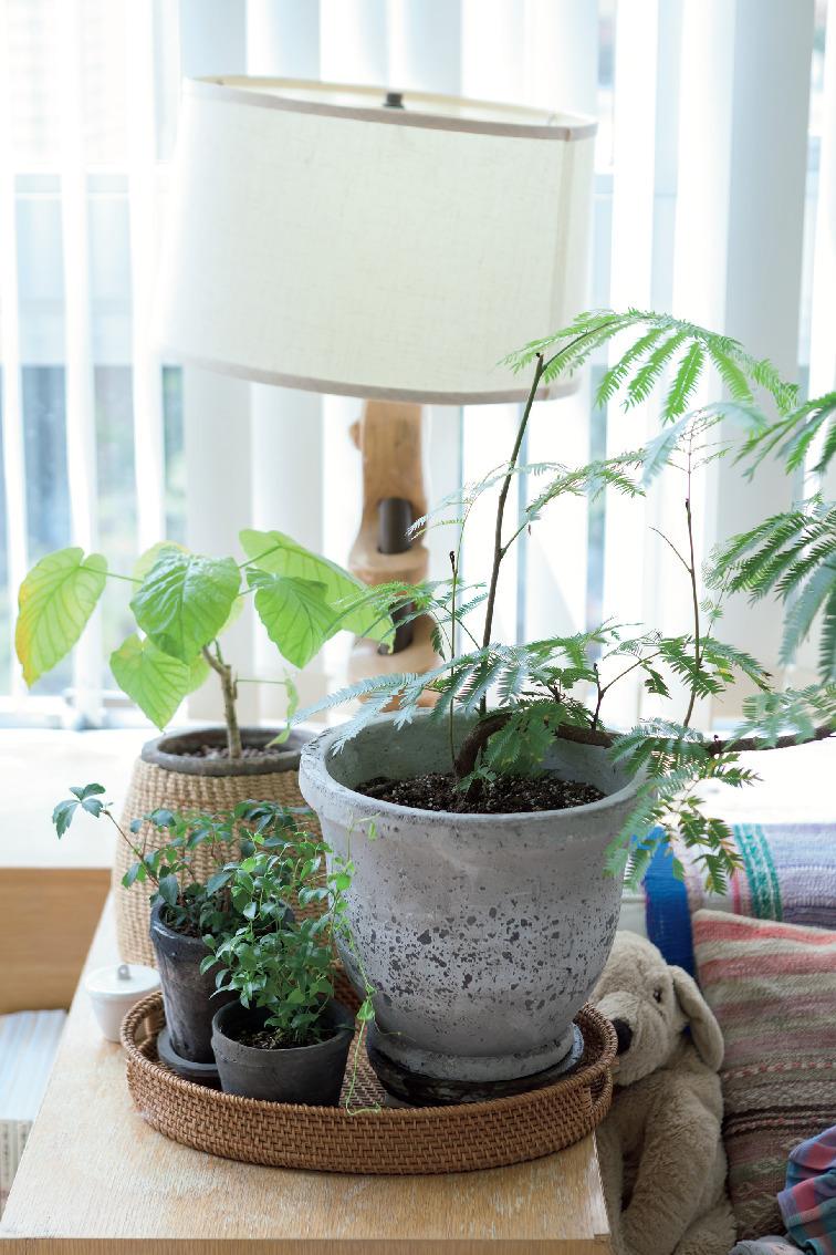 日々の生活を心地よく過ごすための室内グリーンの飾り方 五選_2_3-1