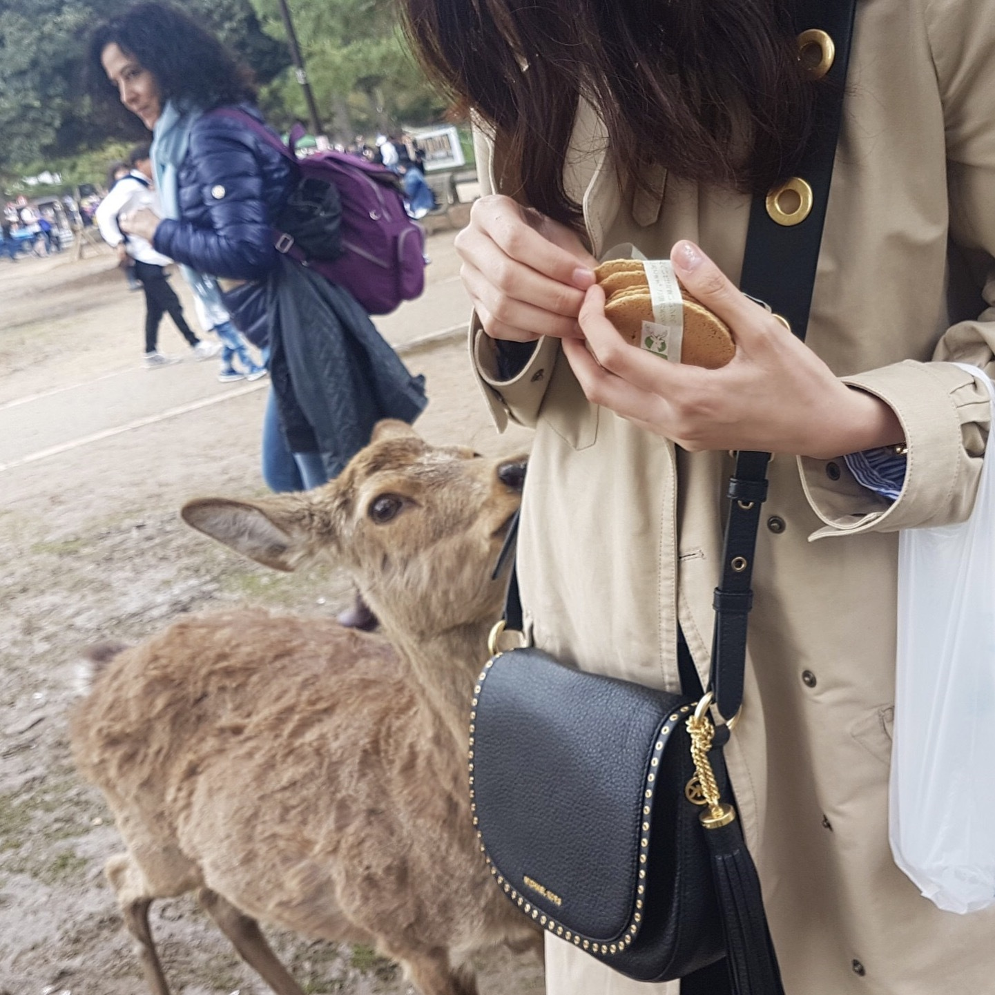 奈良の鹿と触れ合って来ました…!_1_2