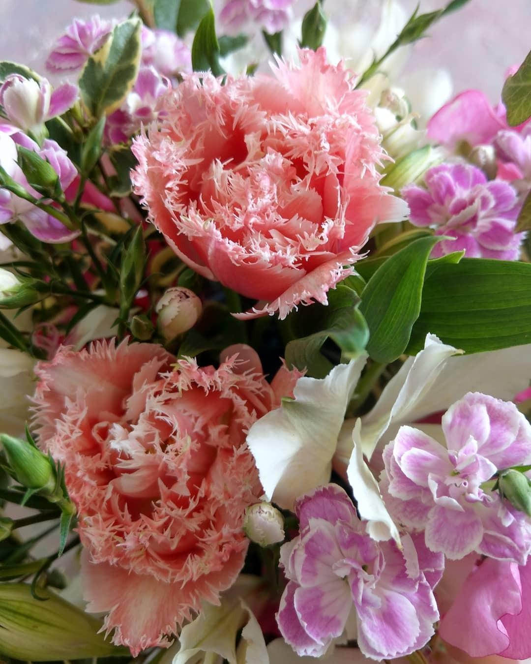 フリンジ咲きのクイーンズランドという品種のチューリップ