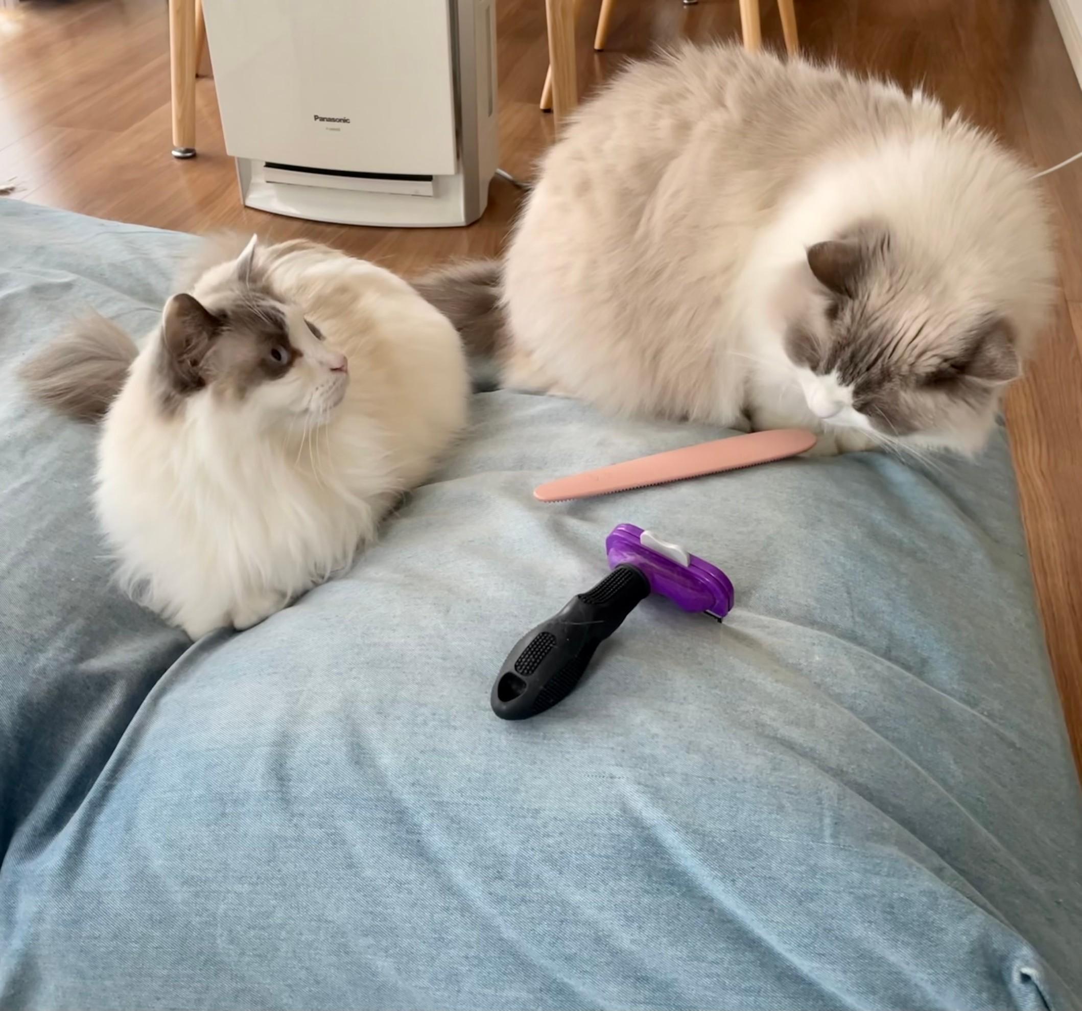 猫 上の子と下の子