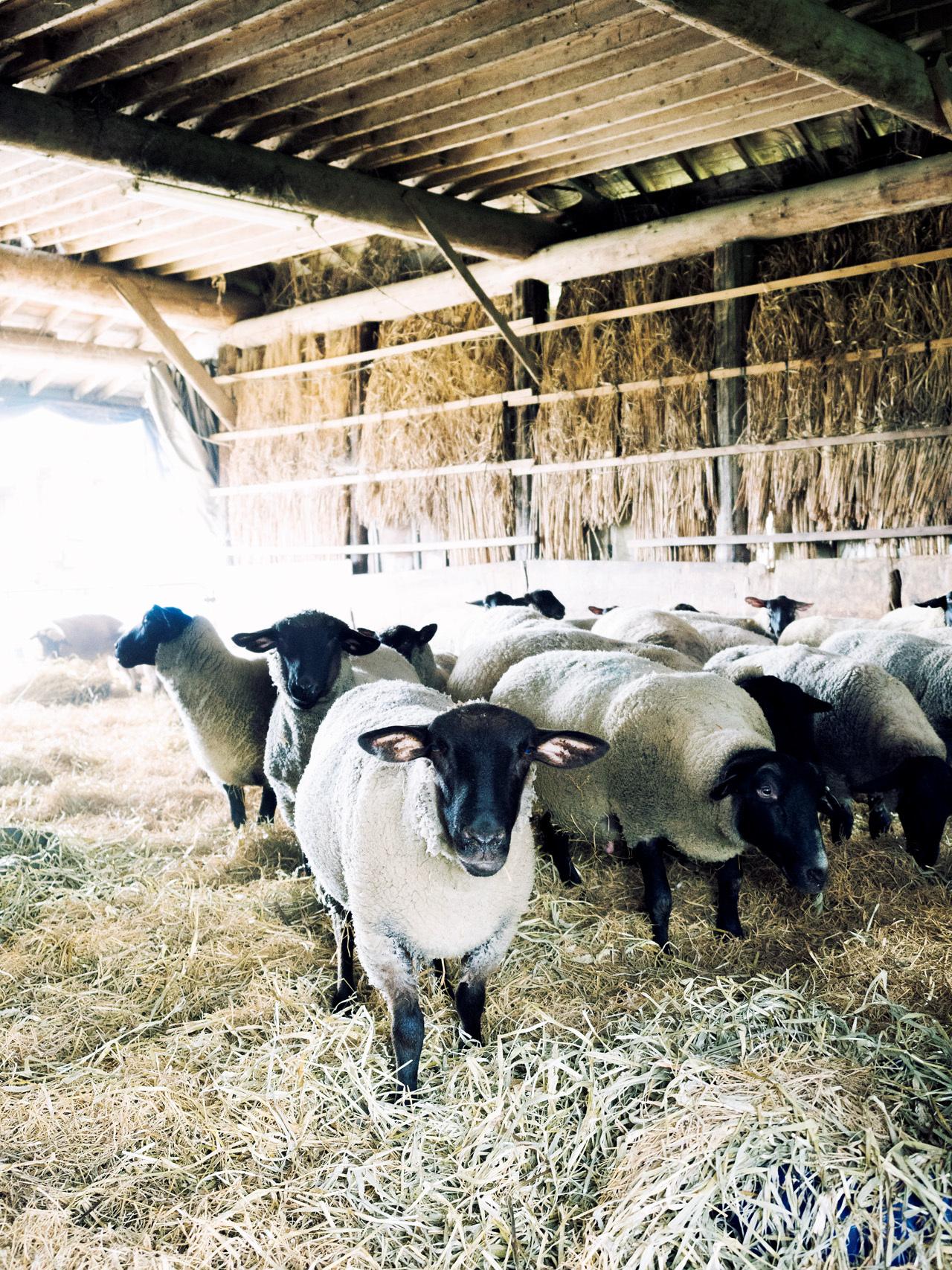 自家栽培の飼料で育てる 羊肉をワインとともに ひつじや_1_2-2