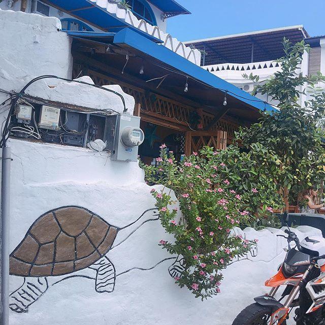 亀、亀、亀・・連休にガラパゴス諸島へ行ってきました!_1_3