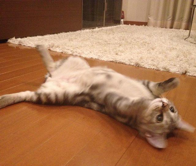 子猫のアラン