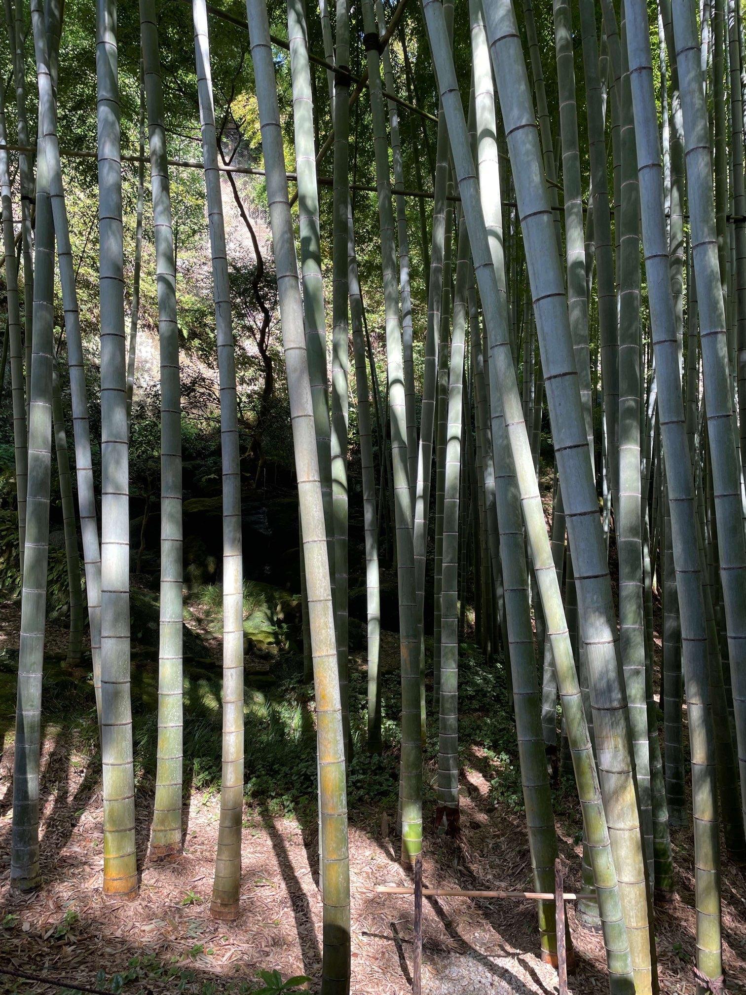 運動を兼ねて、いざ鎌倉報国寺へ_1_3