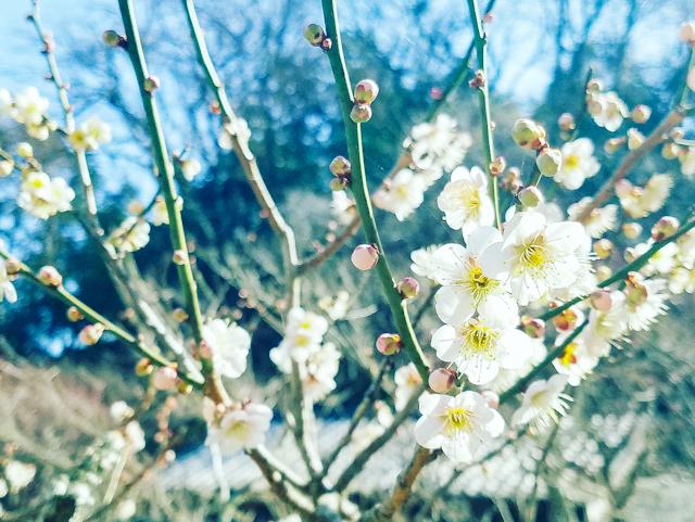 【さかぽんの冒険Vol.5】いざ 北鎌倉から湘南の旅❤️_1_9
