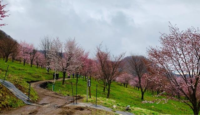 福島県でおすすめの『桜の名所』①_1_5-2