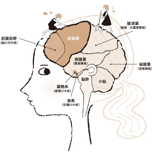 脳のはたらき