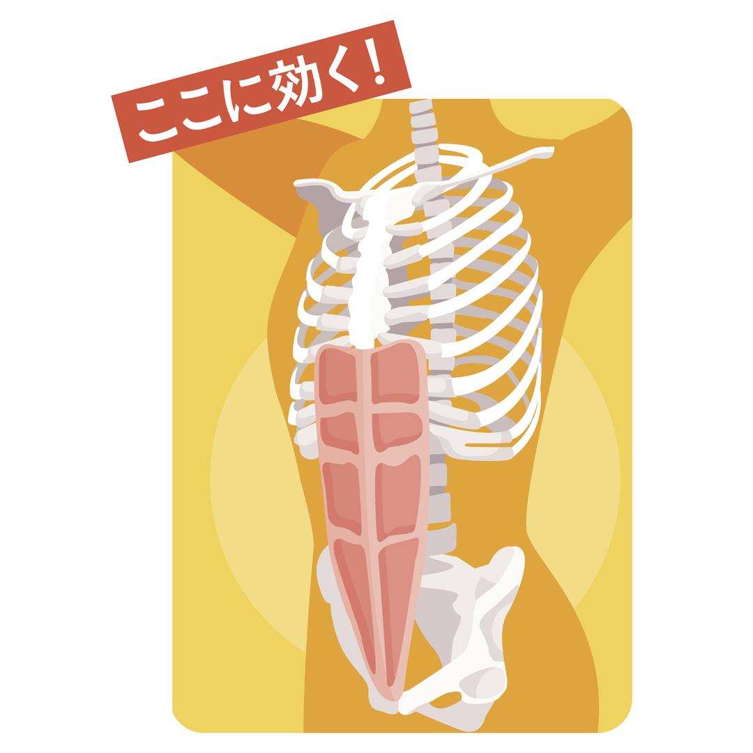 腹筋女子の2週間プログラム★1日5秒の筋トレでくびれ&タテ線をGET!_1_3