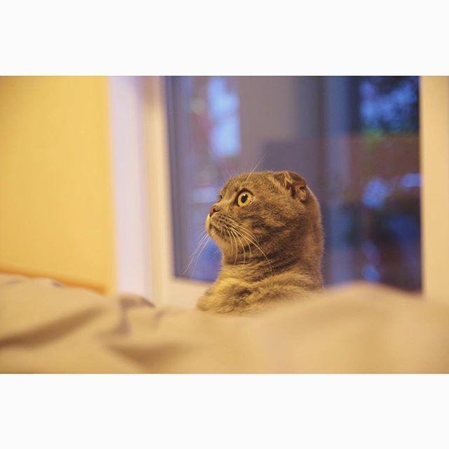 猫宅紀行、知らない町へのお出かけ。_1_1-2