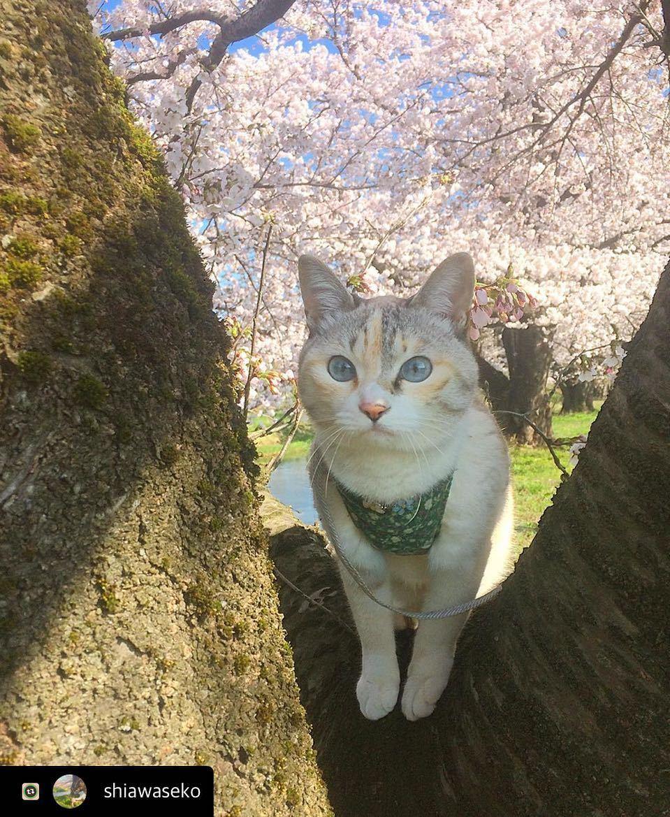 にゃんスタ写真 木登りでお花見