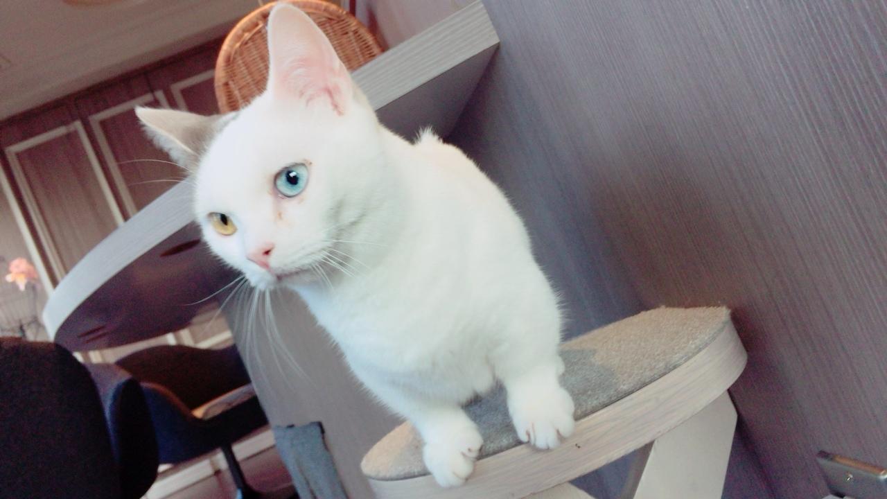 初!猫カフェに行ってきました♡_1_3-3