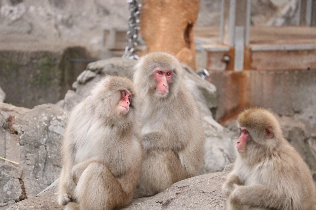 【秋冬レジャー】上野動物園に行ってきました♩_1_3-2