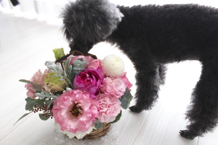 pink bouquet_1_2