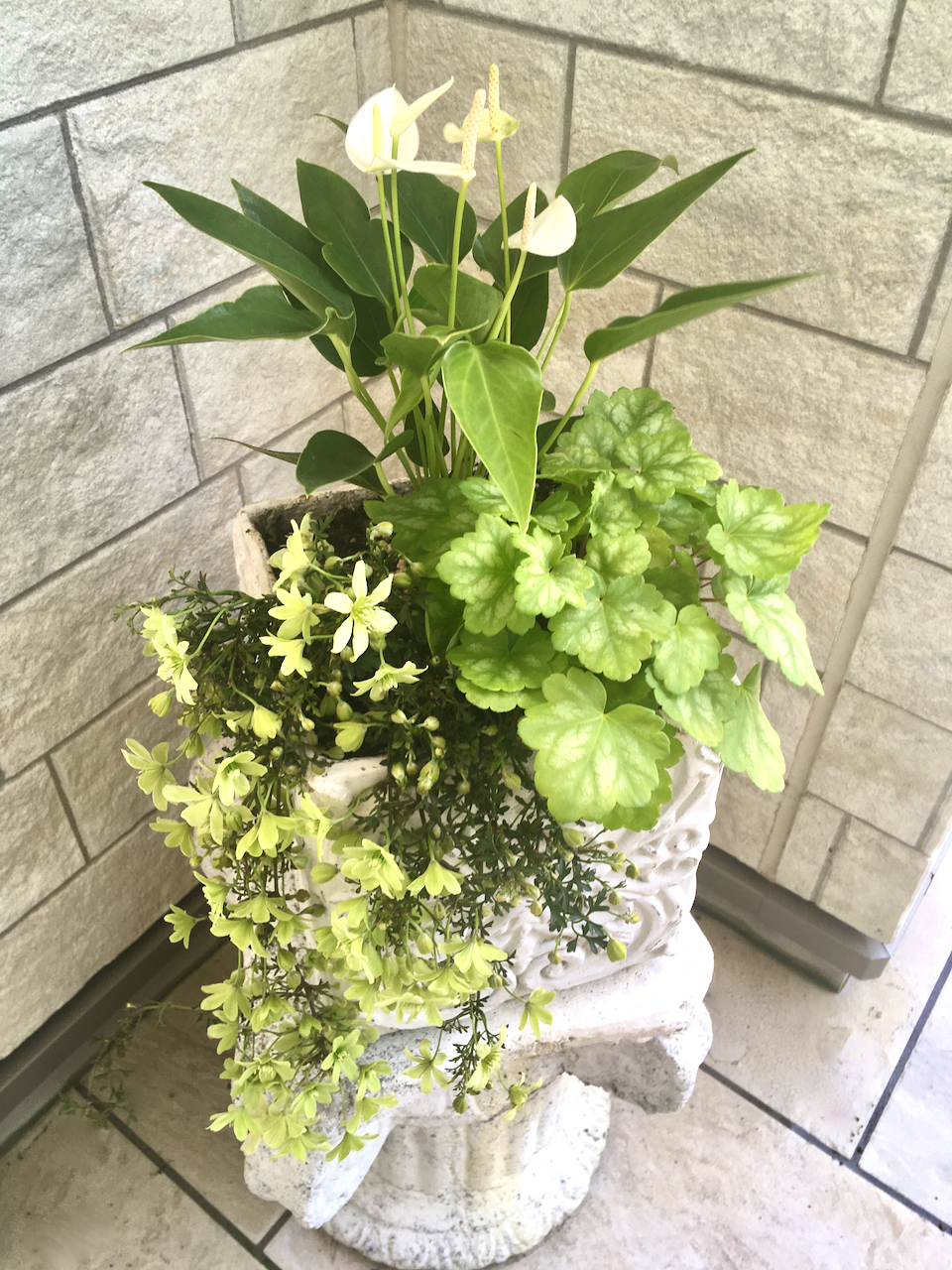 お庭のお花が満開・グリーンも綺麗!_1_3-1